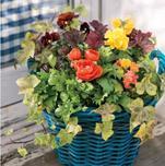 """植物搭配也是艺术,""""夏溪花木市场组合盆栽课程""""将于8月中旬开办!"""