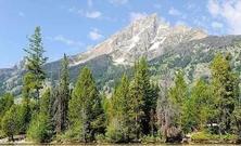 国家林业和草原局党组召开扩大会议总结上半年工作完成情况,部署下半年重点工作任务