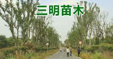 三明苗木图片