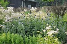 冬日植物配置应该怎么做?9个冬季植物配置诀窍,再冷也要美美哒