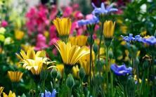 园林人必须知道的88个花卉基本知识点
