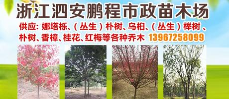 浙江泗安鹏程市政苗木场