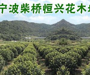宁波柴桥恒兴花木场