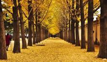 树阵是园林绿化工程中常用的艺术造园形式,树阵景观的植物配置要点解析