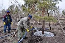 寒冬季节对幼苗和新栽苗木是一个严峻的考验,冬季苗木的养护措施,6步搞定