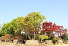 高品质苗木不愁卖吗?种植整体水平的提高,优质苗木比例越来越大