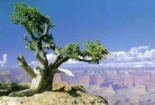 """景观植物栽植的""""数""""和""""术"""",你会吗?一起来看看怎样规划不同数量级的植物材料"""