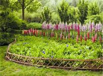 宿根花卉如何点亮颐和园耕织图景区,宿根花卉的应用现状及发展前景!