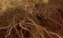 养树先养根,买树先看根,优质苗木的培育,需要地下和地上同步进行