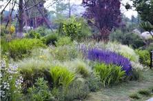 """观赏草在欧美国家的应用非常成熟,如何发展,才能实现""""可持续应用""""?"""
