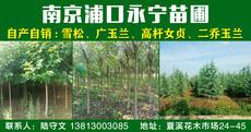 南京市浦口区永宁苗圃图片