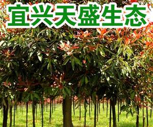 宜興市天盛生態種植專業合作社