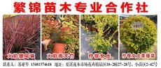 繁錦苗木專業合作社圖片