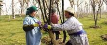 如何防冻防寒,保证苗木安全越冬,将园林植物灾害减少到最小?冬季园林植物防冻、防寒攻略