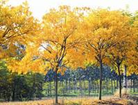 未来花木行业走向趋势