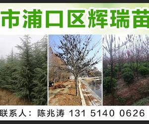 南京市浦口區輝瑞苗圃場