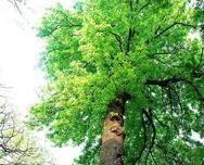 苗木知识——山苗和圃苗都是苗子,你能分得清吗?怎么才能区分他们呢?