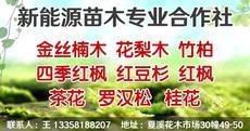 新绿源苗木专业合作社图片