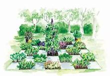 蔬菜花园引领花园设计新风尚,虽不够优雅但错落有致的蔬果园,人们一直好逑