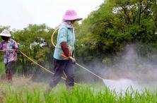 盛夏高溫多雨,全年雜草防除的關鍵時期,除草有哪些講究?