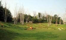 冬季气温降低气候干燥,草木枯黄落叶,草坪进入休眠期,冬季草坪养护要点
