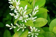 新栽植的苗木,防寒工作很重要,关于冬季绿化苗木实用养护管理措施