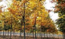2018年苗木市场进一步回暖,收获如何?苗圃投资扩建有讲究,该种什么品种好?