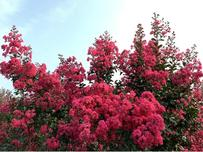展商聚焦:如何让苗木产品更出彩,来园艺嘉年华和蕴桐园林聊一聊