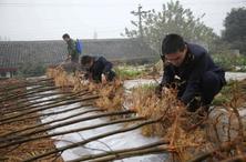 林草种子、苗木引进新规即将实施,相关规定将于2020年1月1日起执行
