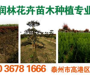 高港区润林花卉苗木种植专业合作社