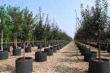 """园林工程中秋季栽植树木的成活率不高,秋季苗木栽植管养""""五不宜""""总结!"""