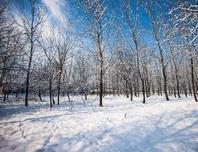 植物已进入休眠期,大雪过后,园林养护恰逢其时,工作也日益繁重!