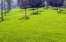 长三角地区地处南北过渡带,解决长三角地区冬季混播草坪养护技术成为重中之重