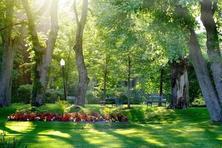 园林绿化设计施工原冠苗成为一种潮流,那什么标准的最好?