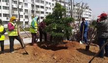 """树穴是栽植树木的立地之本,树穴挖的""""好"""",苗木成活""""早"""",挖掘树穴技术篇"""