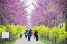 园林大生态时代,真的来了!生态修复,环境友好,绿化升级,该种什么树?