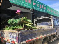市场水生植物迎来销售旺季