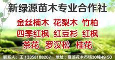 新綠源苗木專業合作社圖片