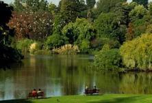 景观树又称为孤植树、独赏树、标本树或独植树,常用景观树种知识大全