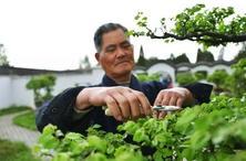 """园林植物修剪中的""""望闻问切""""可使植物达到理想的株形,提升园林艺术效果"""