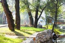 新时代园林苗木需求展望(上)——新时代的苗木需求