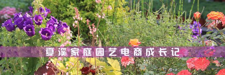 夏溪花木市场盆景村即将开园