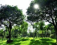 如何培养出冠形优美根系发达干形健壮的苗木,这才是市场发展的最终目的?
