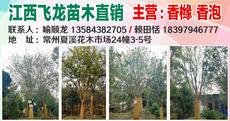 江西飞龙苗木直销(夏溪市场24幢3-5号)图片