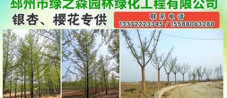 邳州市绿之森园林绿化工程有限公司