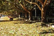 非原冠苗不可吗?园林树木树姿多样化也是一种美也是一种趋势