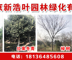 南京新浩叶园林绿化工程有限公司