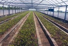 绿化苗木如何实现供需对接?环境绿化是一个持续发展的行业,苗木生产也应该是一个稳定发展的产业