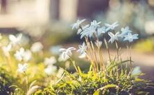 行业资讯:植物新品种保护与产业化国家创新联盟获批成立