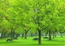 夏季,苗木行情走势渐入平稳期,最新乔灌木、工程小苗价格行情出炉